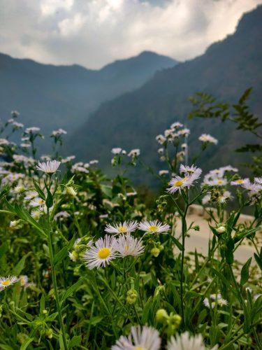 Flowers @ Helipad, Sonprayag