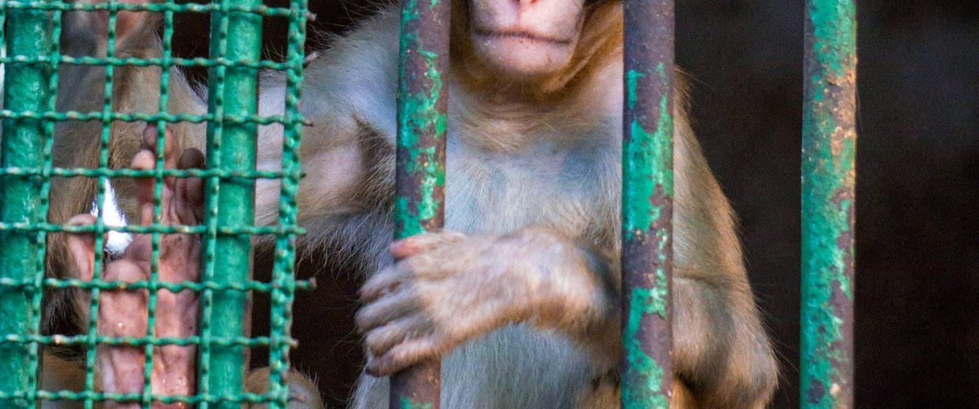abad zoo -monkey3 (3)-01206397369996187771..jpg