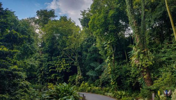 Jurong Pathway